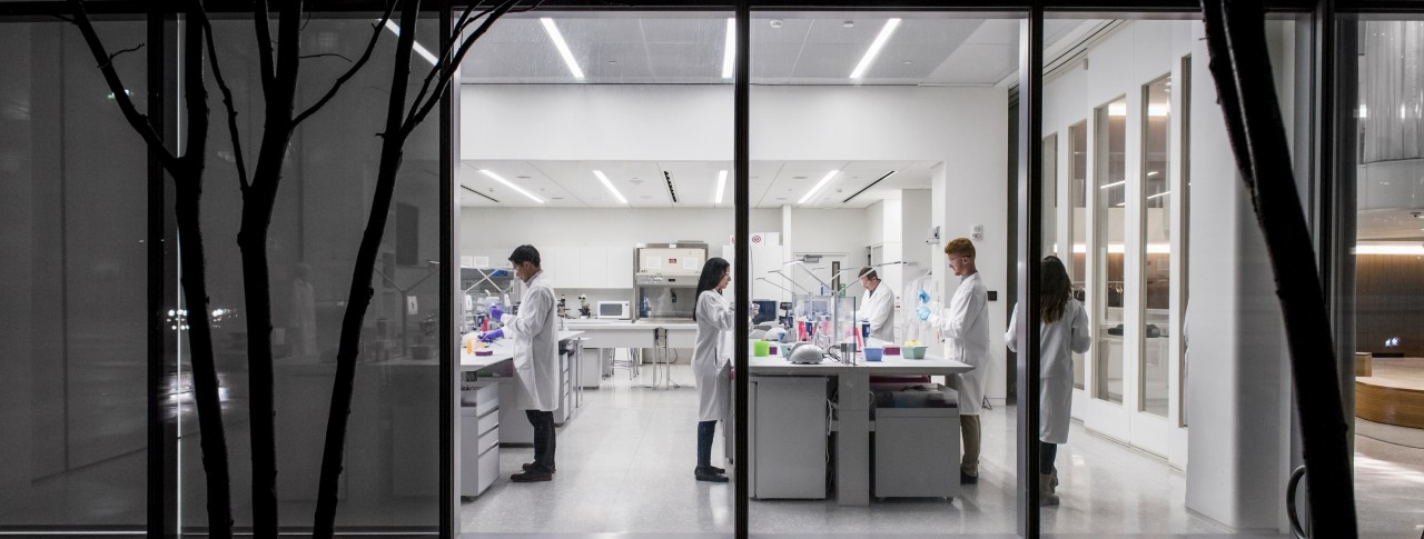 Scientists working in the lab